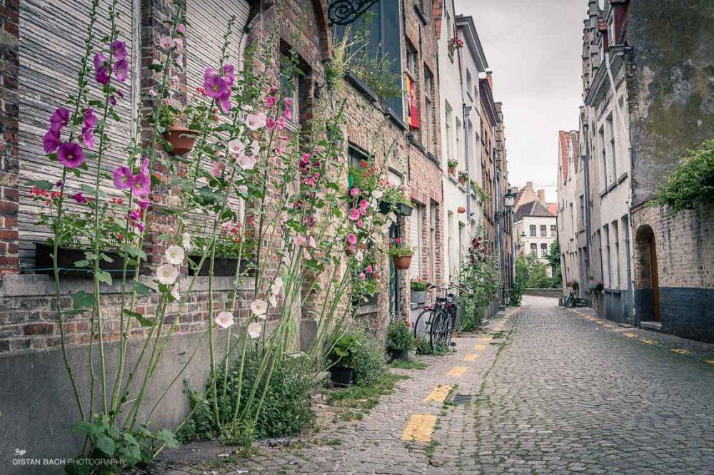 distanbach-Bruges-7