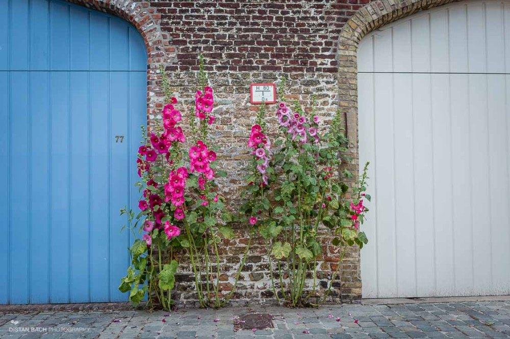 distanbach-Bruges street scenes-1