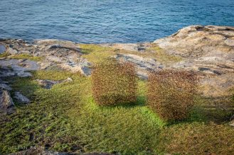 distanbach-Sculptures by the sea-13