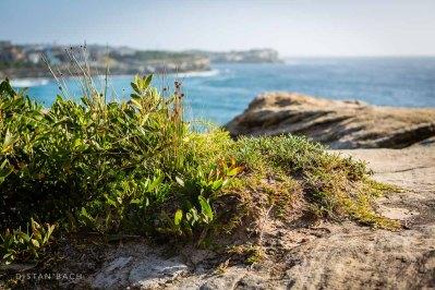 Atop Bronte cliffs