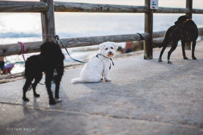 Dogs' watching their owners frolic