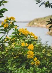 Bay glimpses through the foliage